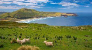 Neuseeland Work and Travel mit Kolumbus